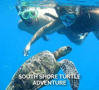 South shore turtle adventure kayaking and snorkeling