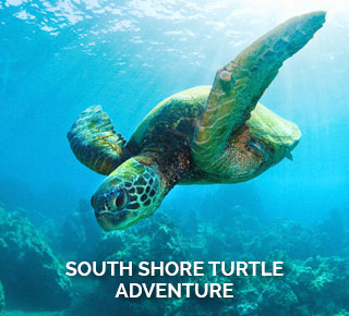 South Shore Maui Turtle Kayak Adventure