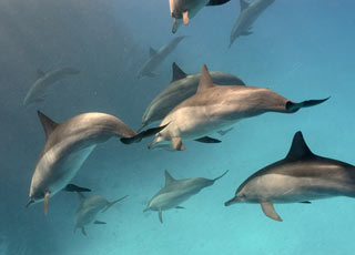 dolphins are sometimes seen during snorkeling in Maui
