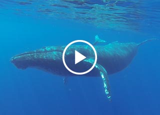 video link of south maui kayaking tour