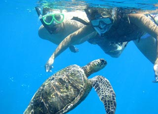 upclose turtle experience in south maui waters