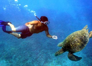 Best maui snorkeling tour to see turtles