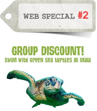 Web Special 2 Group Discount