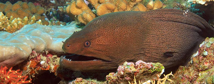 What are the different types of eels?